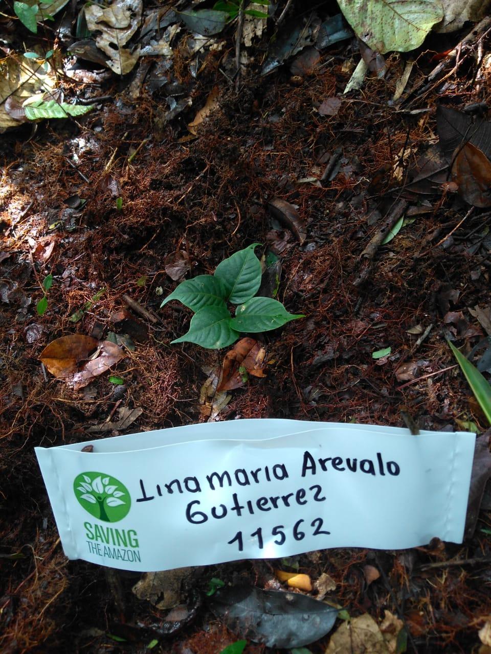 Lina Maria Arevalo Gutierrez