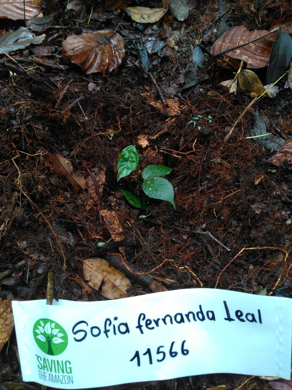 Sofia Fernanda Leal