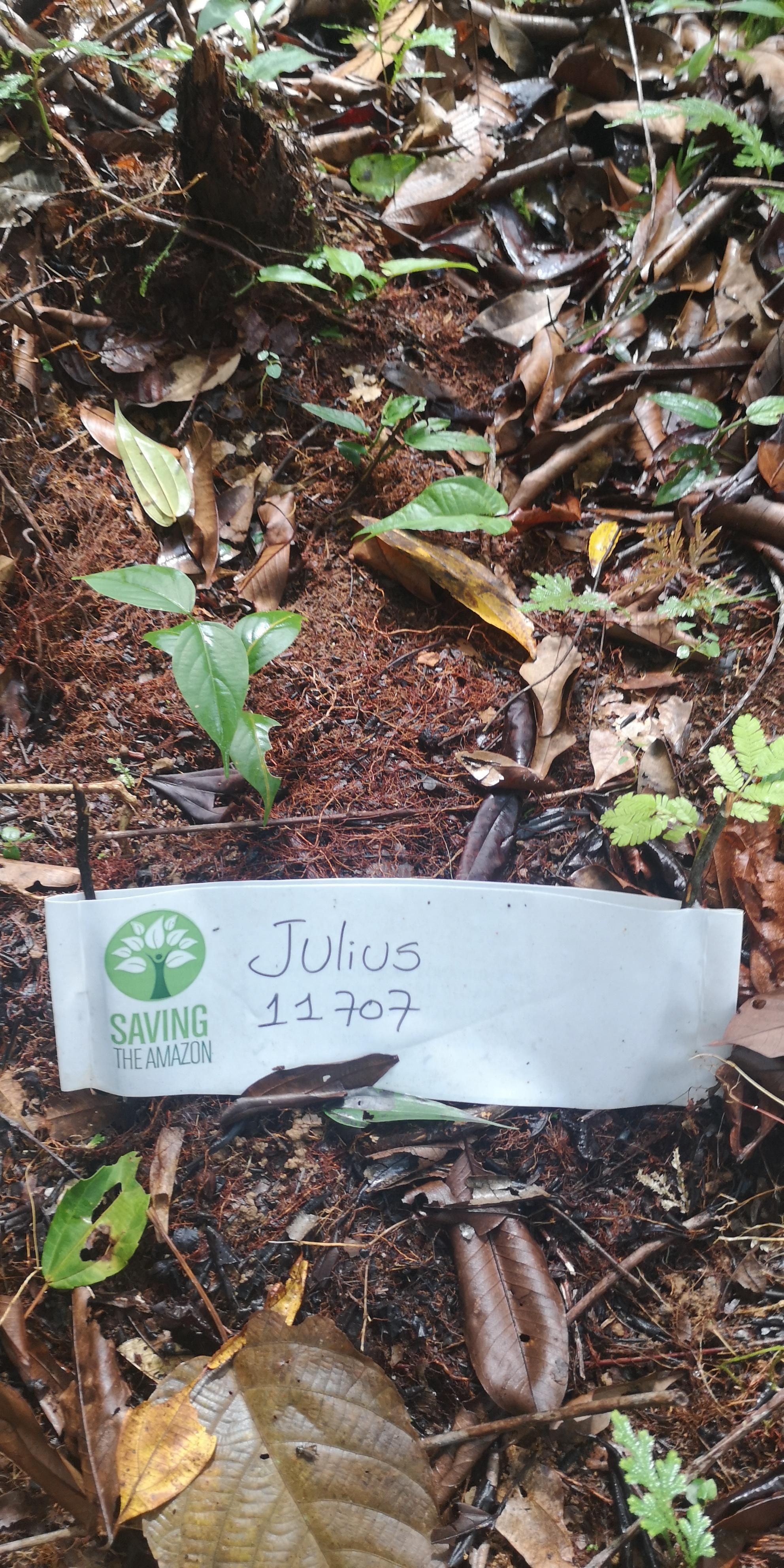 Julius .