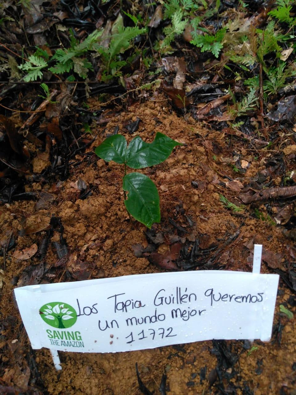 Liliana Guadalupe Tapia Guillen
