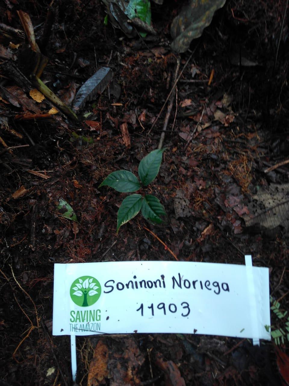 Soninoni Noriega
