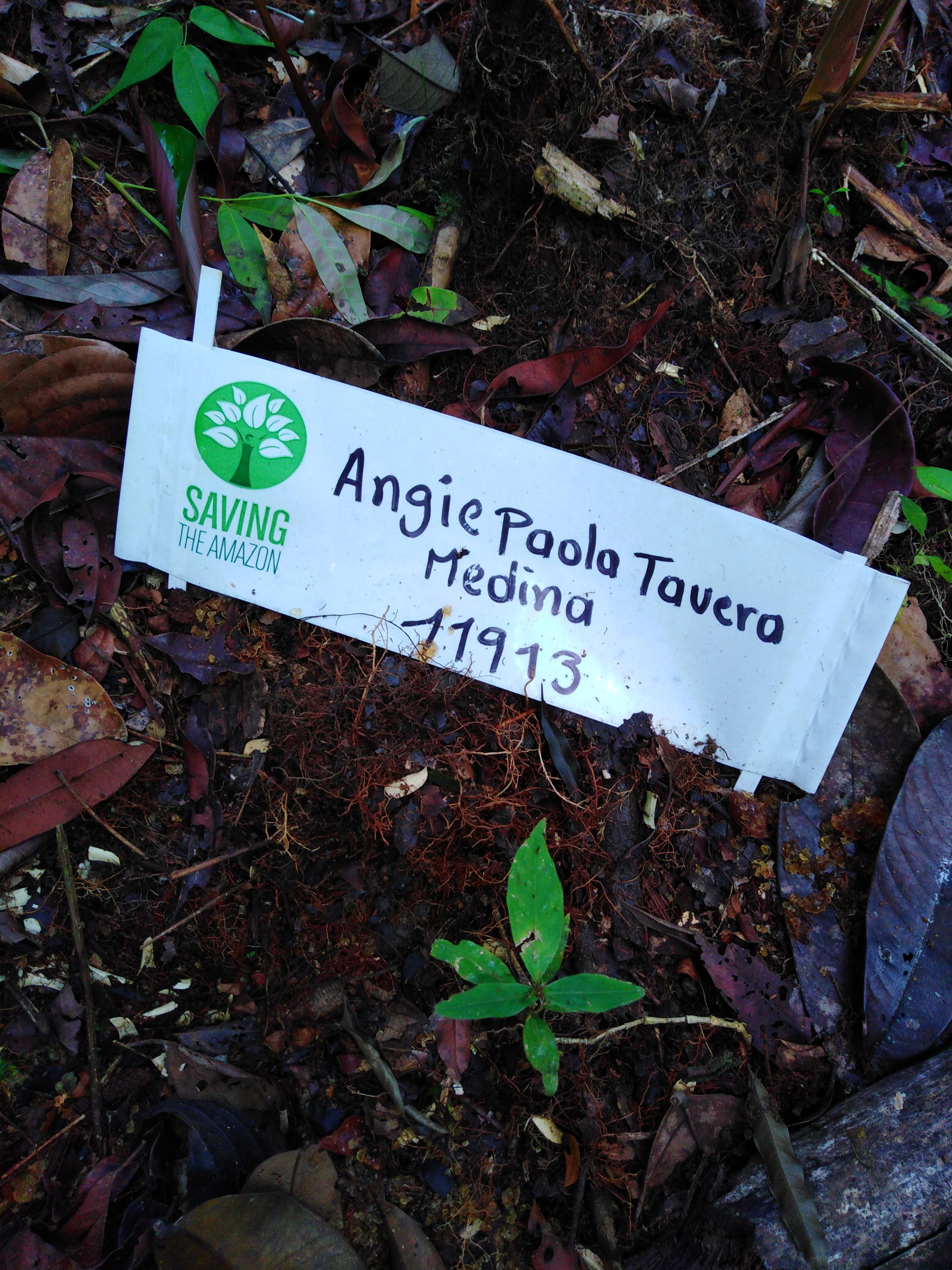 Angie paola Tavera Medina