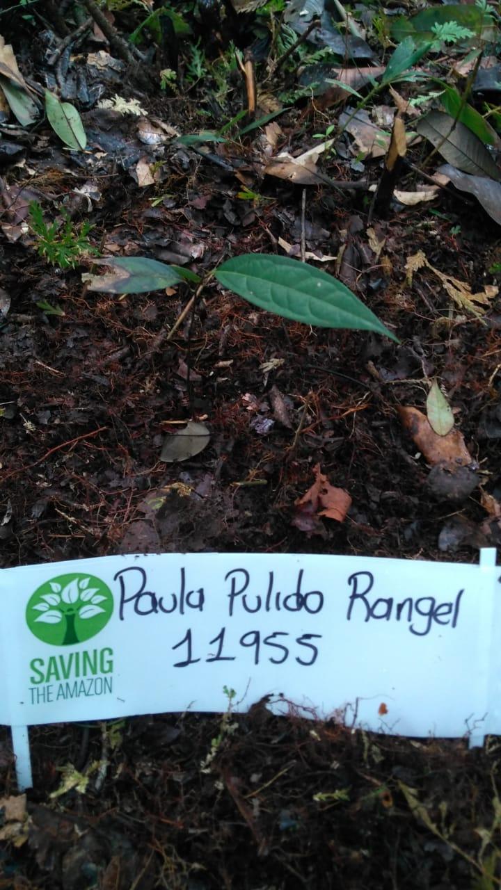 Paula Pulido Rangel