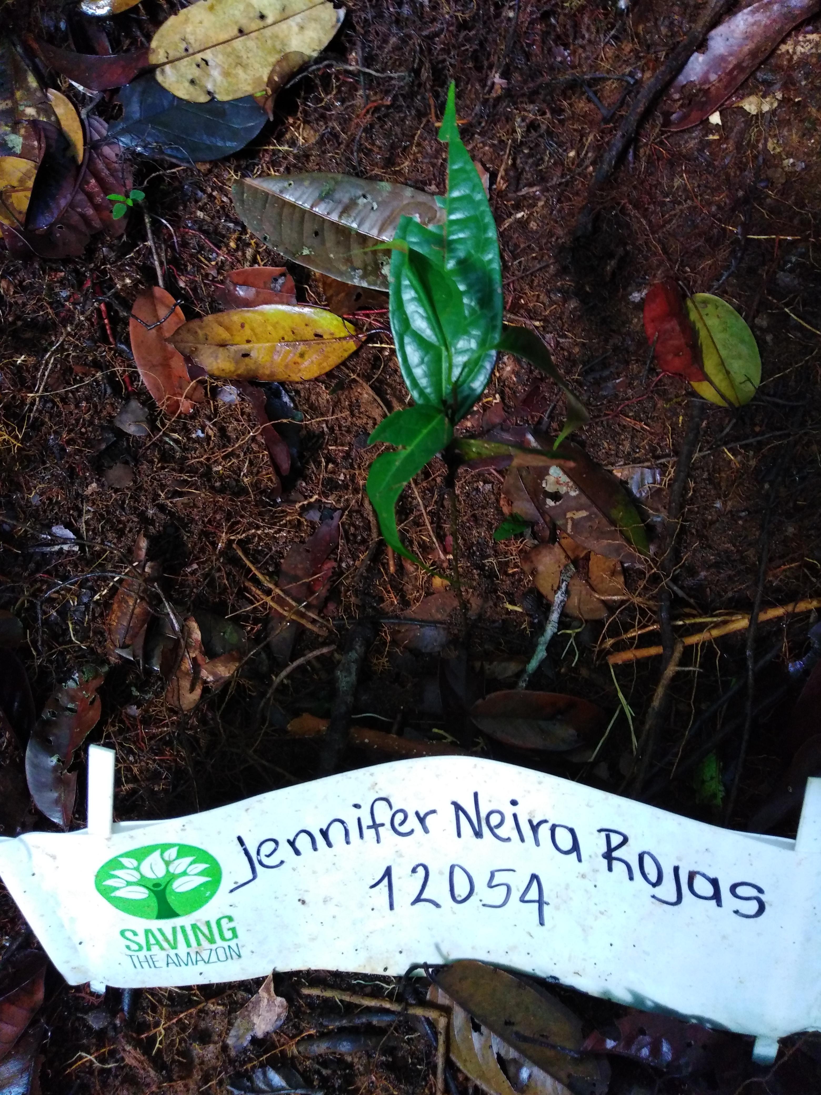 Jennifer Neira Rojas