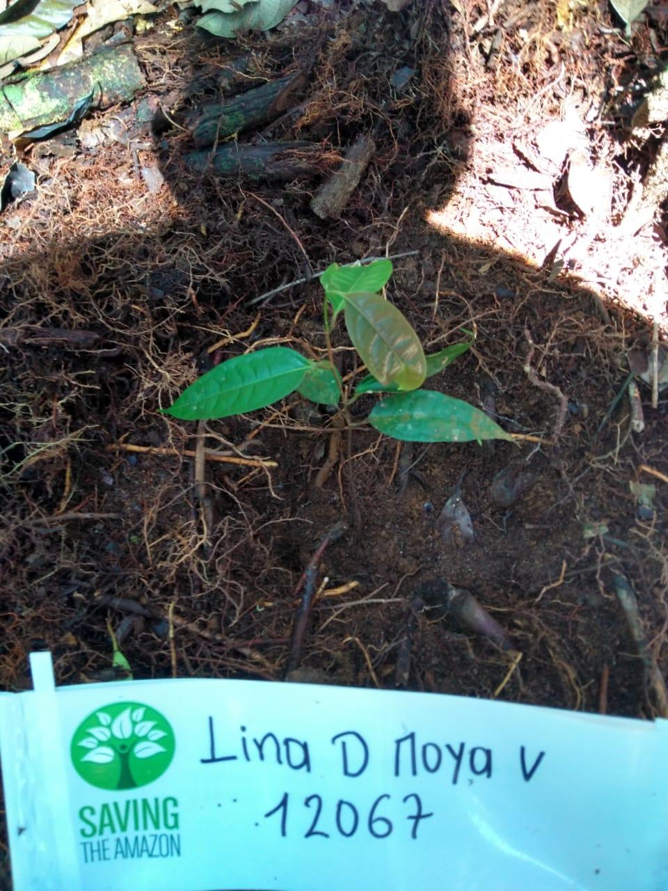 Lina D Moya V