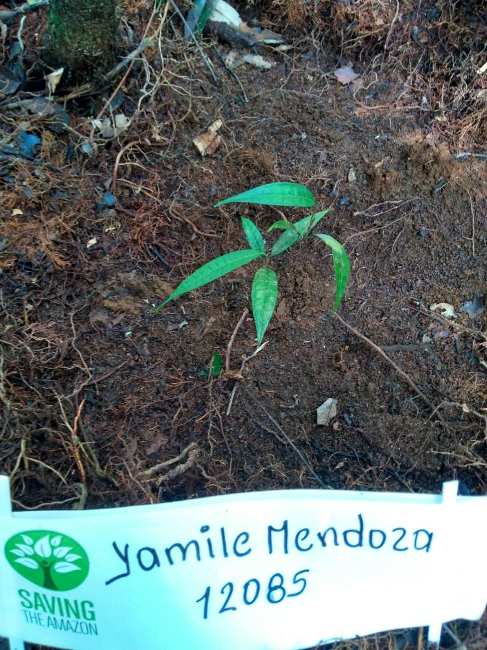 Yamile Mendoza