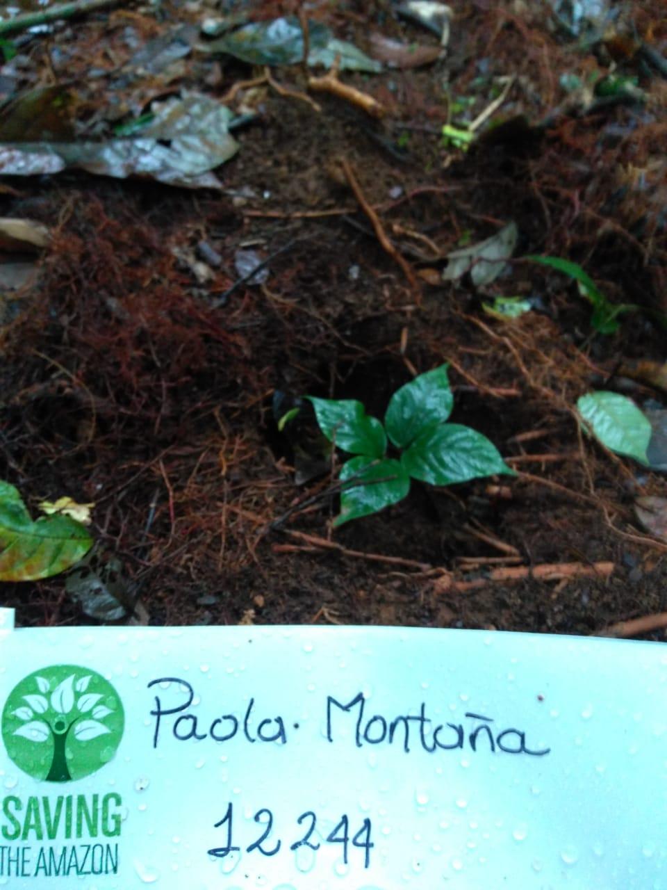 Paola Mountain
