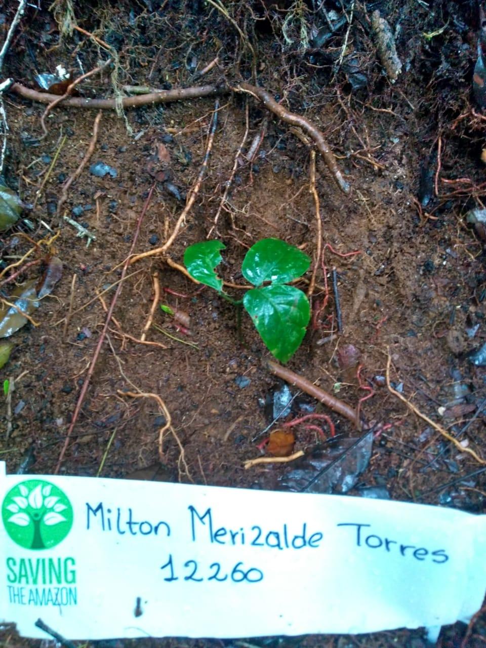 Milton Merizalde Torres