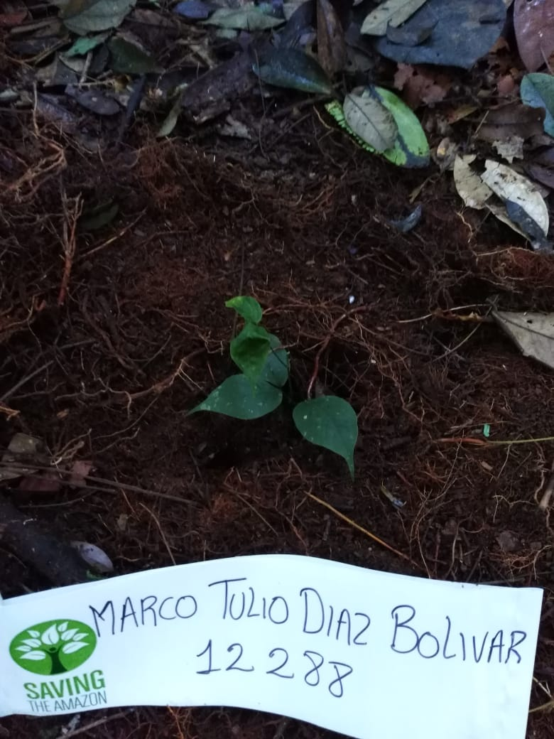 Marco Tulio DIAZ BOLIVAR