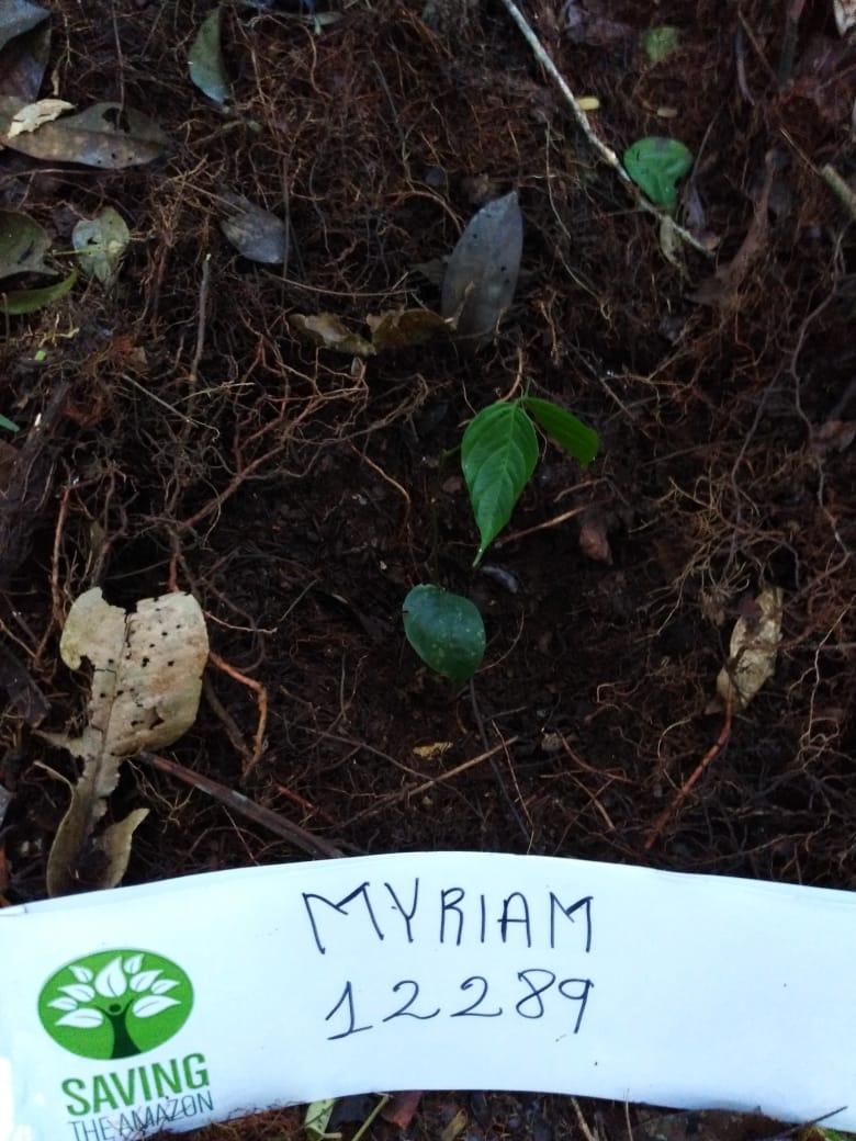 MYRIAM MOYA