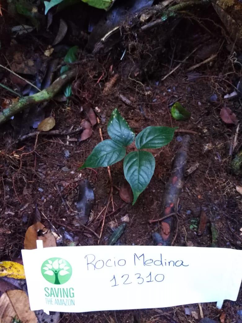 Rocio Medina