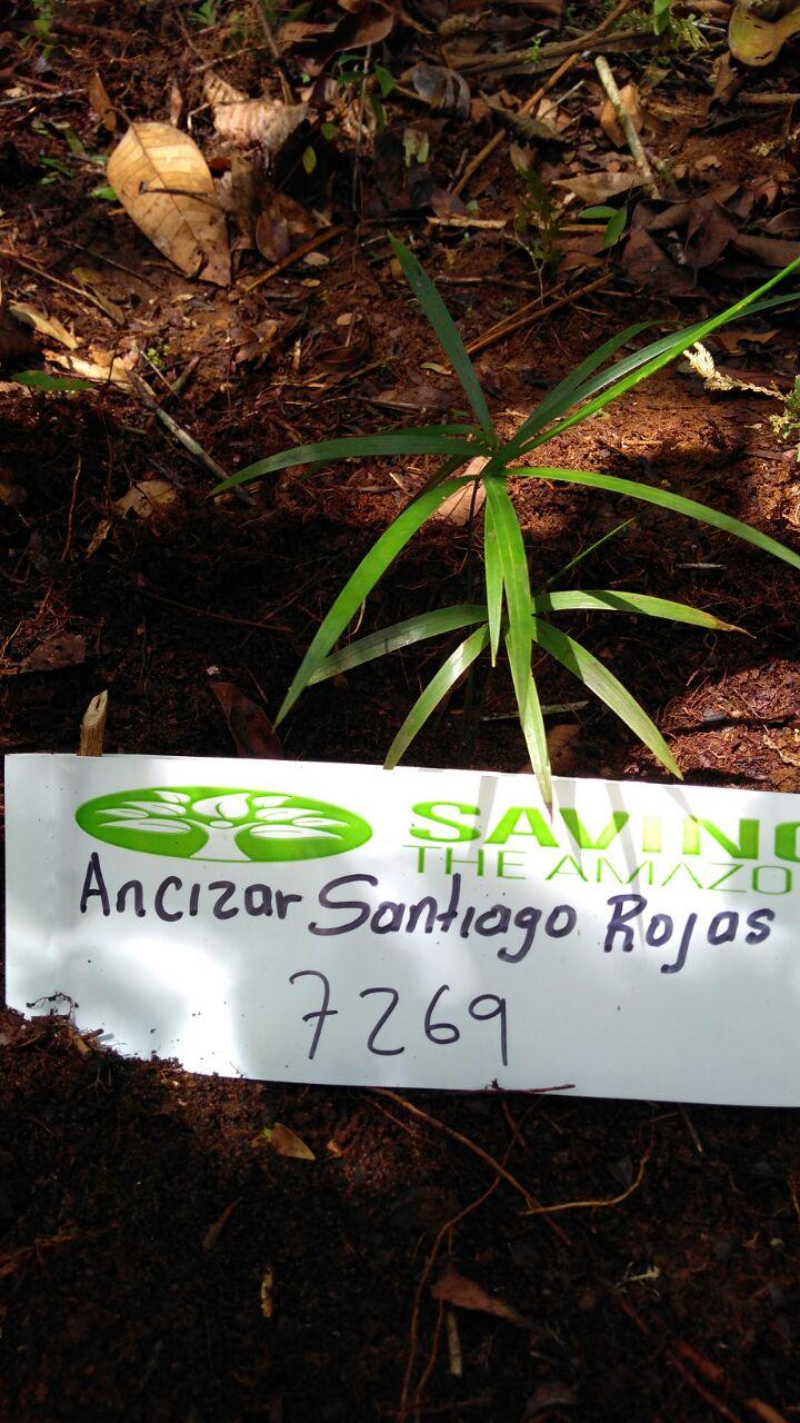 Ancizar Santiago Rojas