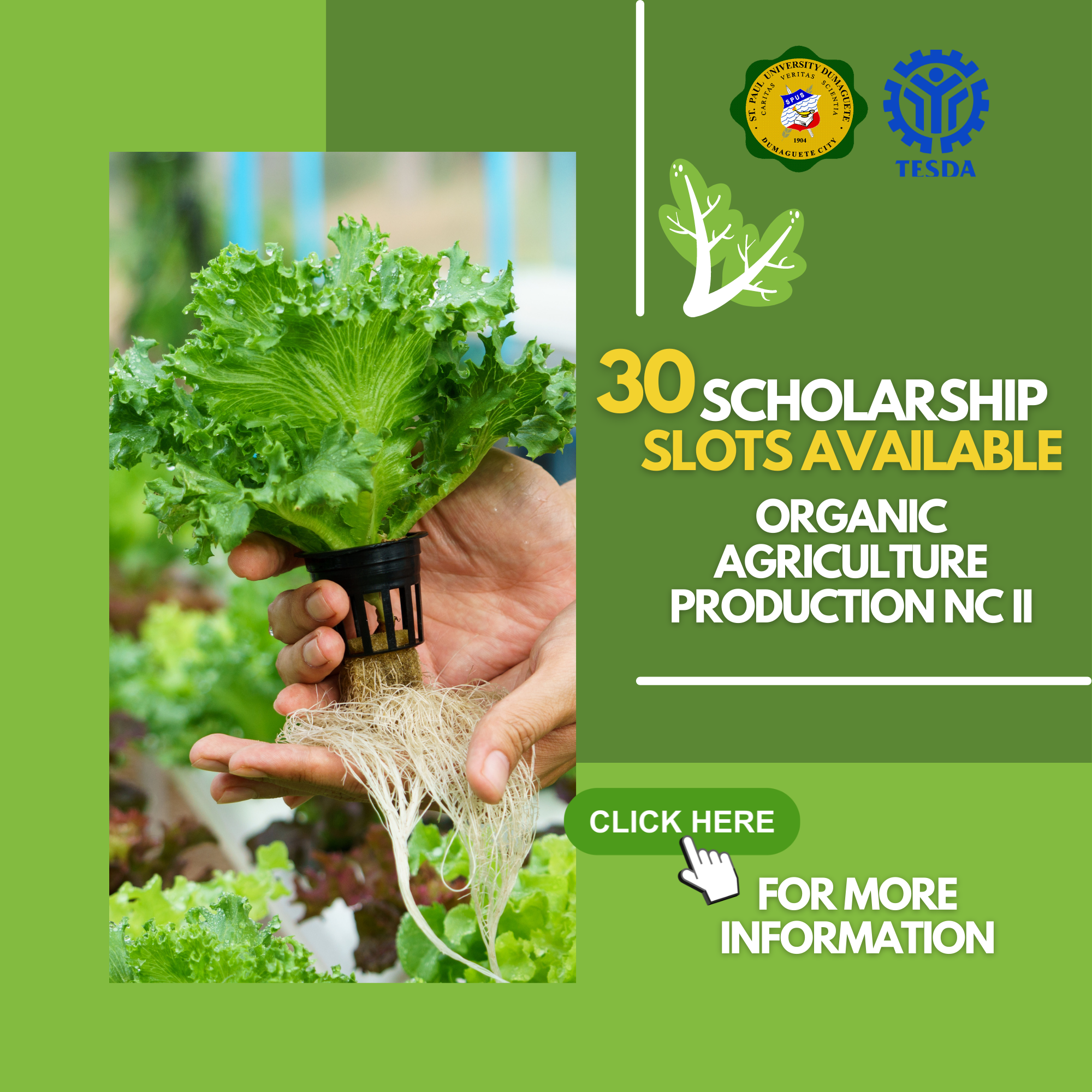 Be NCII ready with organic agriculture production