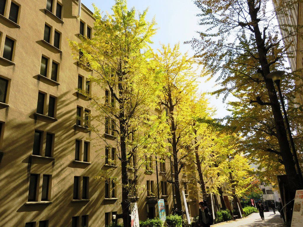 Study in Japan under the fall foliage