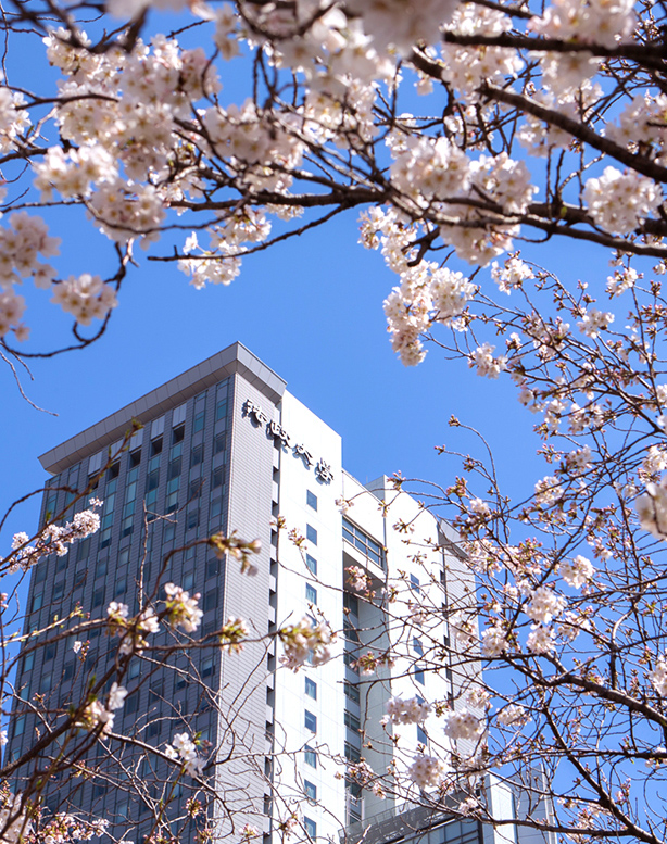 Sakura blossoms at Hosei University