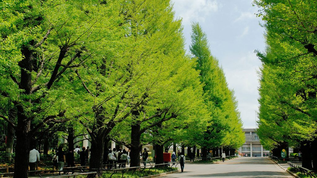 Beautiful greenery at Keio University's Hiyoshi campus