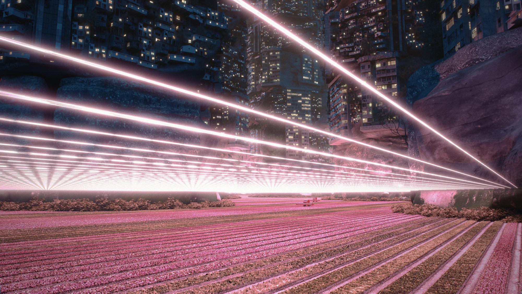 pink city neon lights field