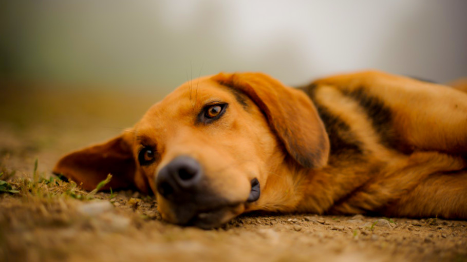 Do You Know Yelling at Dogs Can Affect Their Long Term Health?
