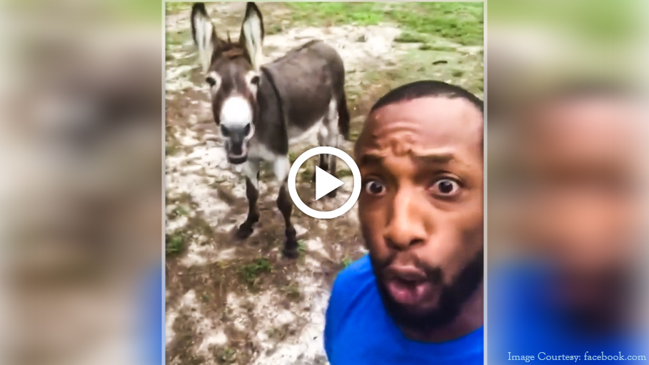 Video of a Donkey Singing 'Circle of Life' with His Owner Goes Viral