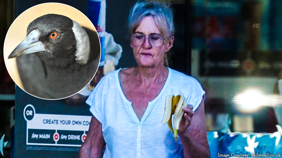 Woman Removed Magpie's Beak: An Alarming Situation in Tuncurry