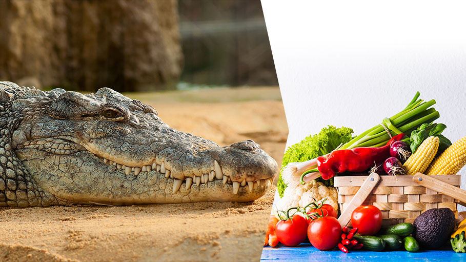 Crocodiles were Once 'Vegetarians' Says New Study