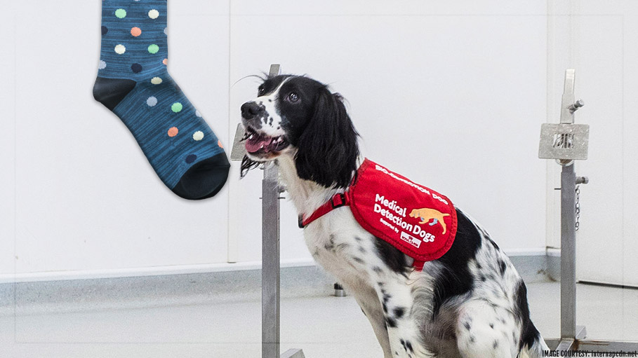 Dogs Can Detect Malaria by Smelling People's Socks