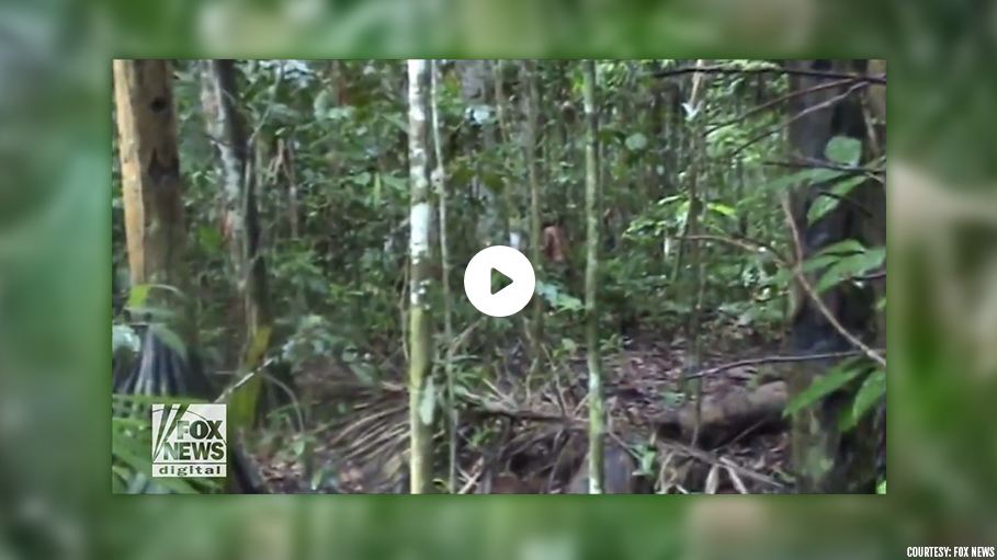 'World's Loneliest Man' Spotted in Amazon, Watch His Viral Video