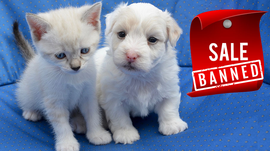 Sale of Puppy and Kitten, Now Banned in Britain