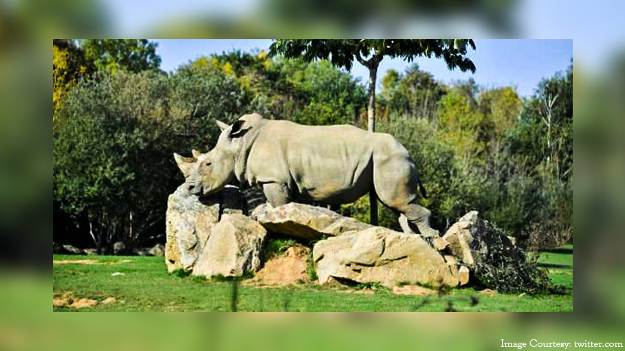 World's Oldest Captive Rhino Sana Died at the Age of 55 Years