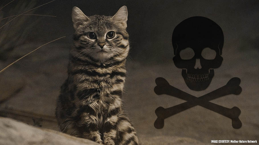 The World's Deadliest Cat Is This Small Adorable Cat