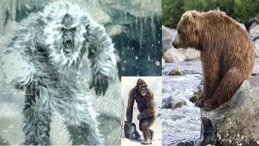Yetis are Bears? DNA Test Reveals the Truth