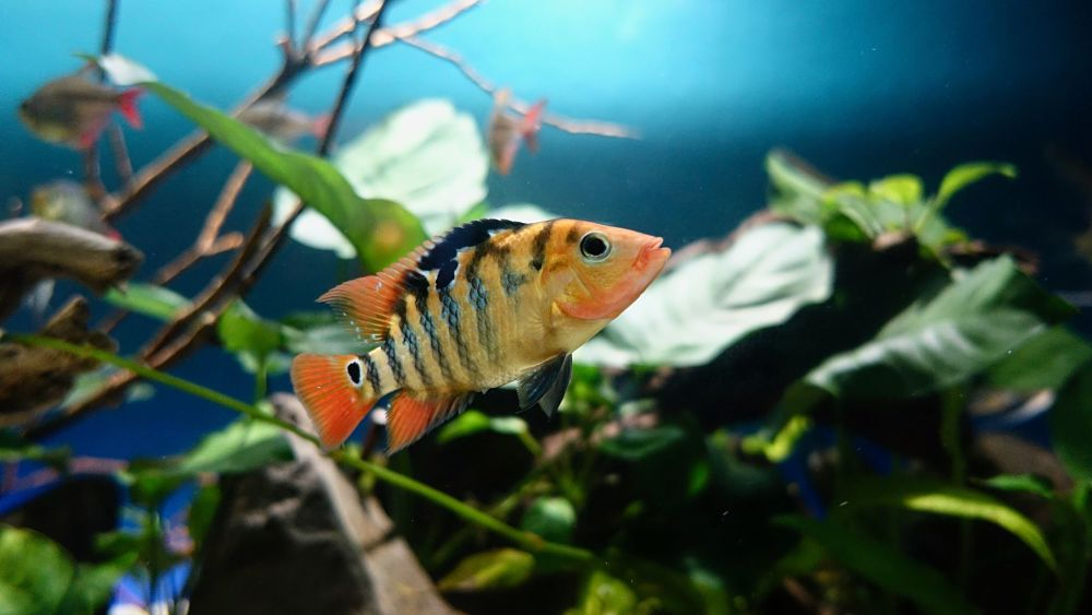 popular types of pet fish