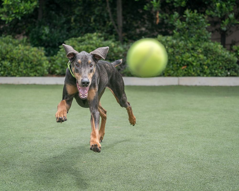 games for dogs fetch