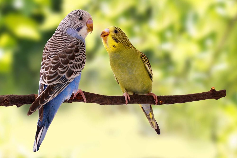 best low maintenance pets for apartments birds