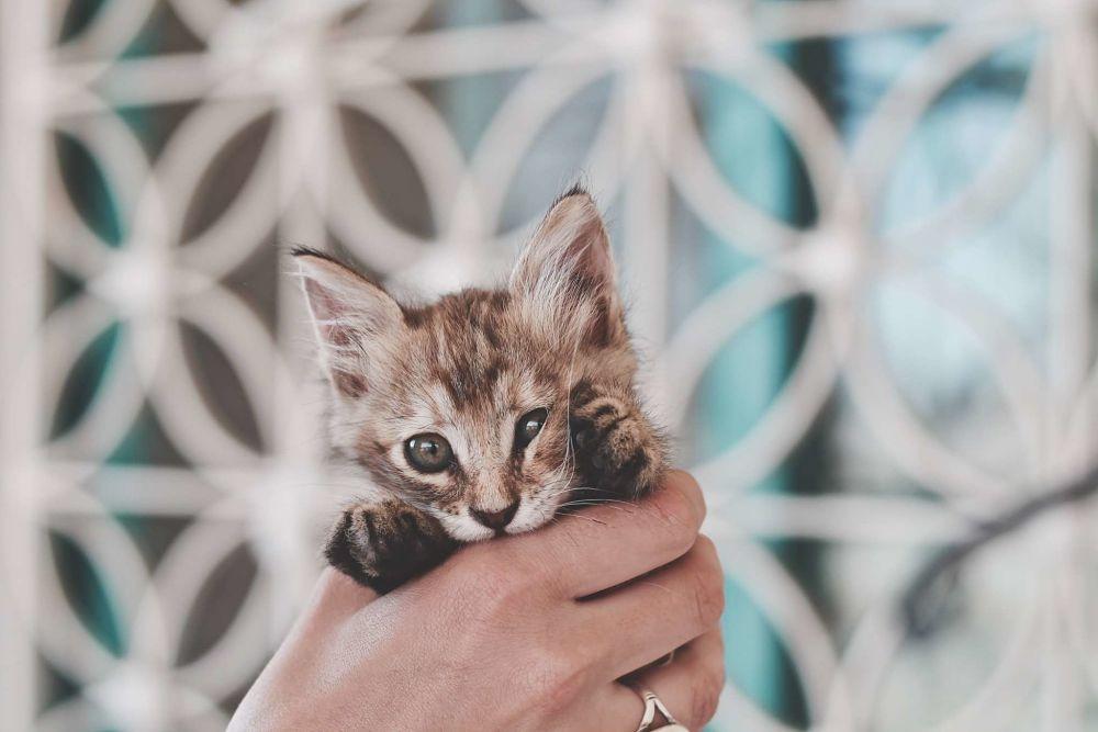 holding a kitten