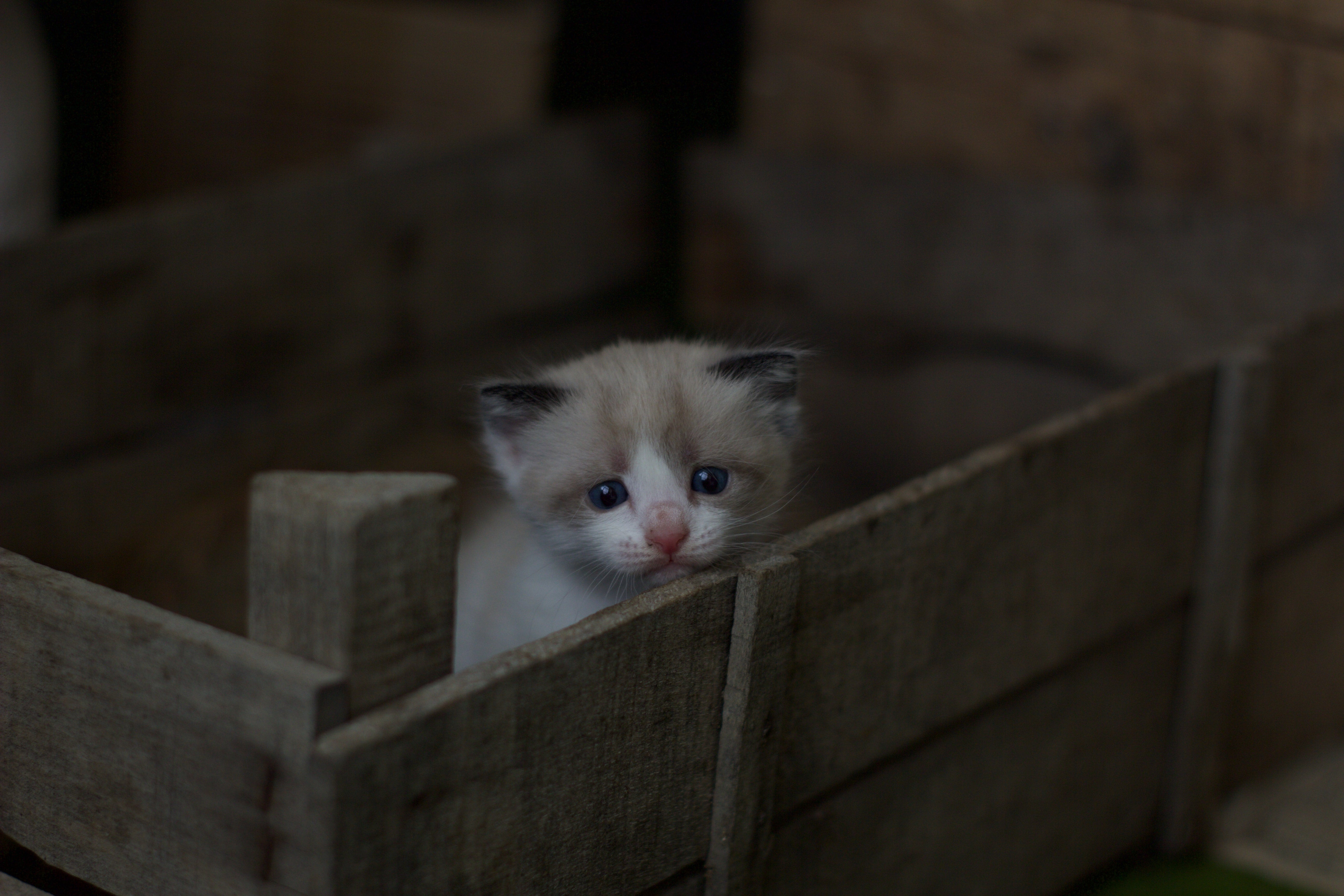 tiny kitten in a crate