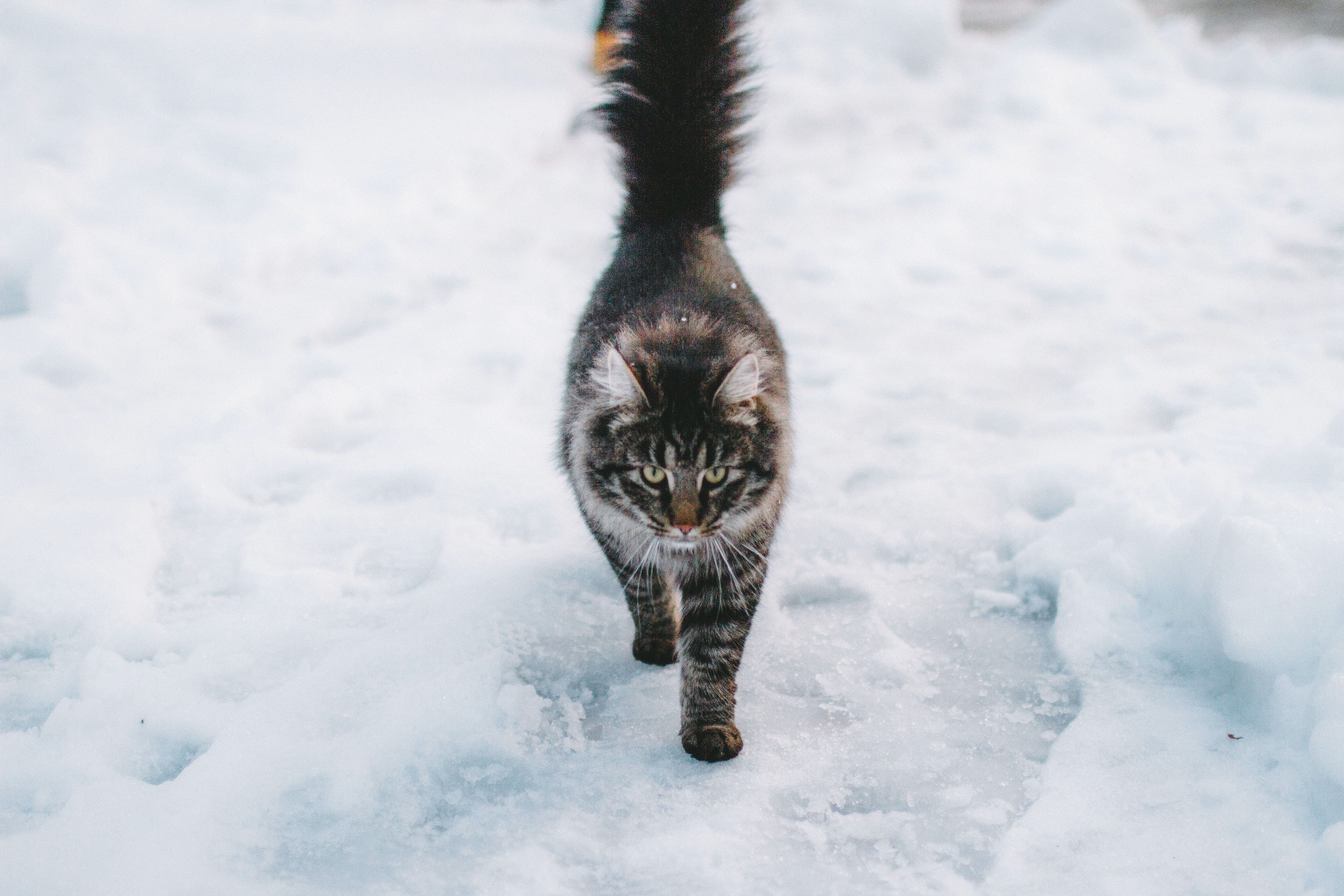 cold cat in the snow