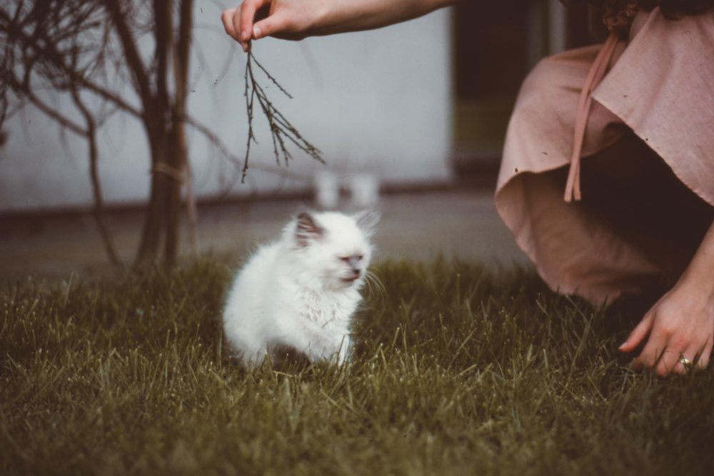 kitten playing with owner