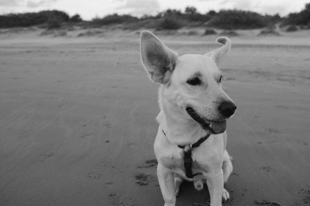 black and white dog on beach