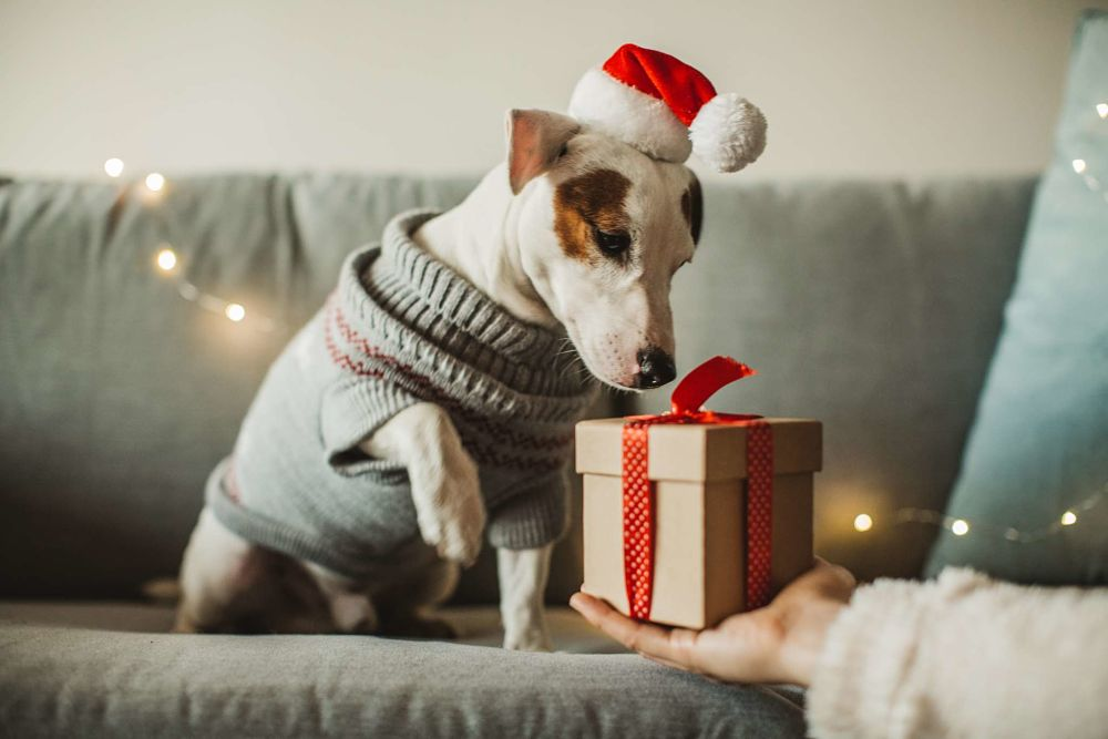 best gifts for dogs