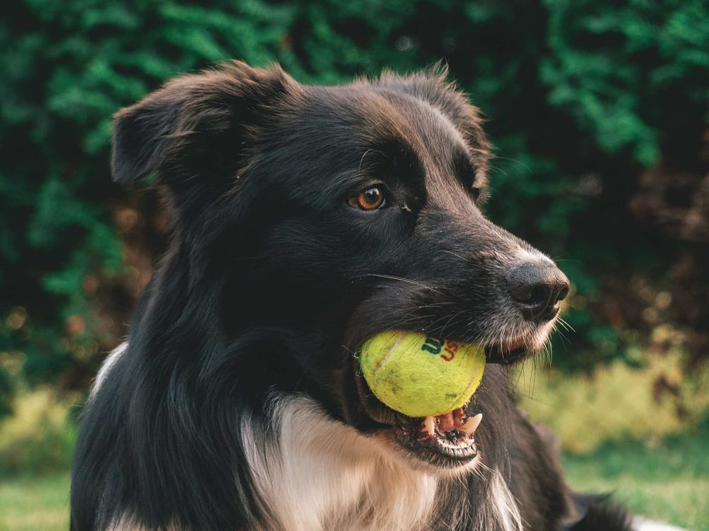 best gifts for dogs ball