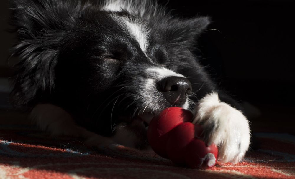 best gifts for dogs kong toy