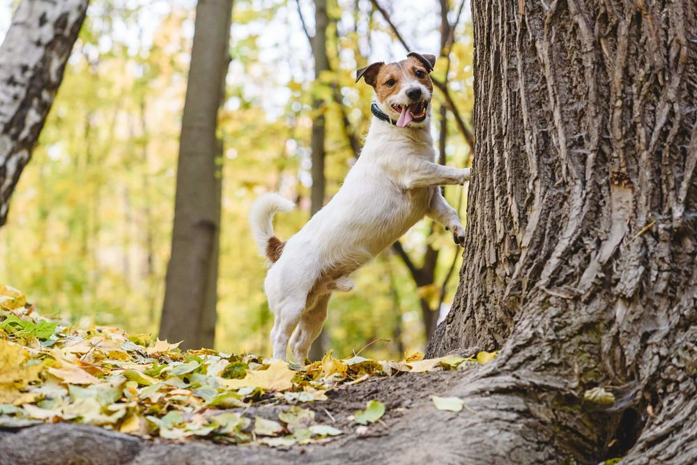 best gifts for dogs squirrel