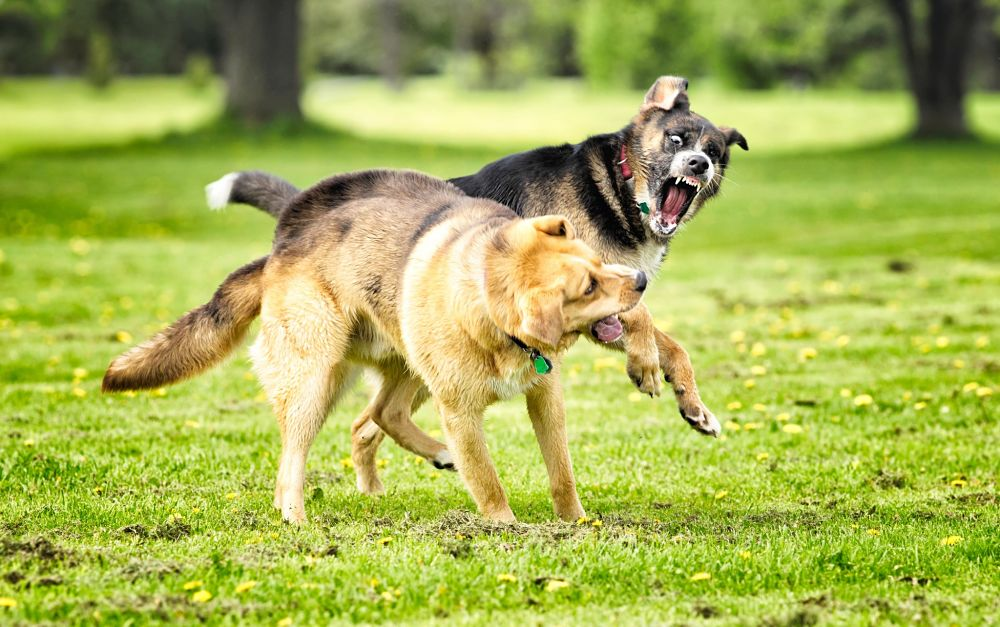 how to break up a dog fight between