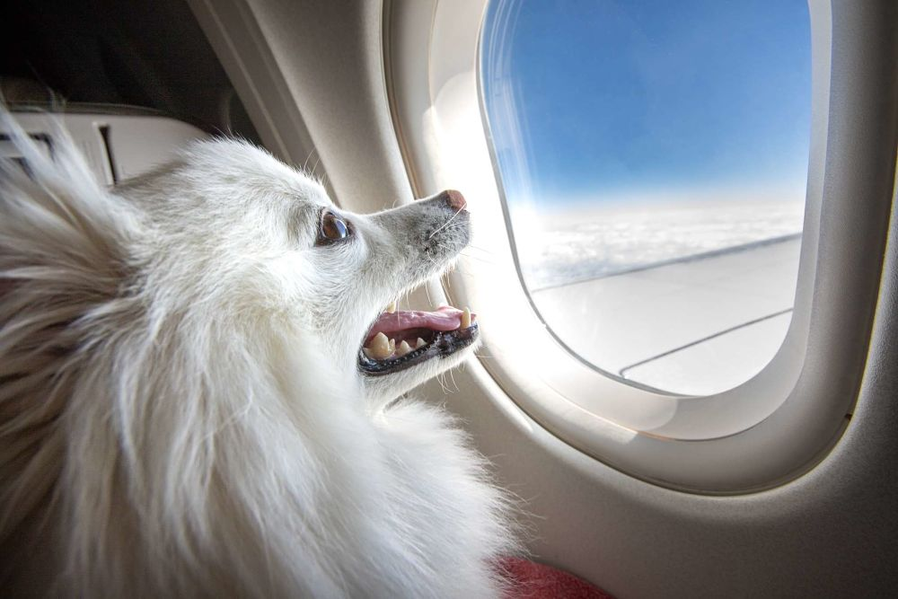 tips for flying with a dog