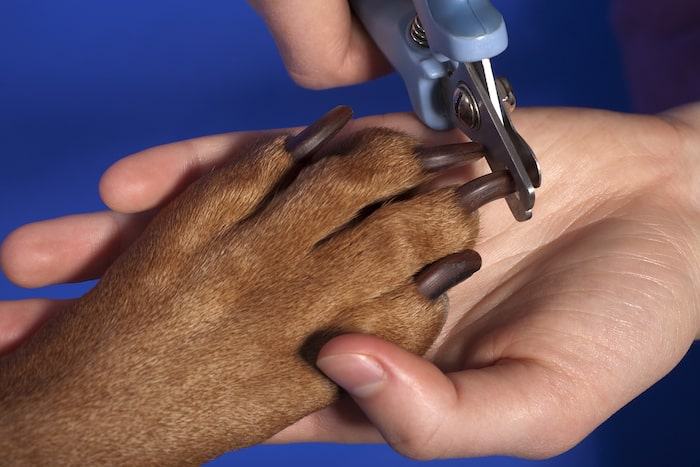 how to groom a dog in 8 easy steps - trim dog nails