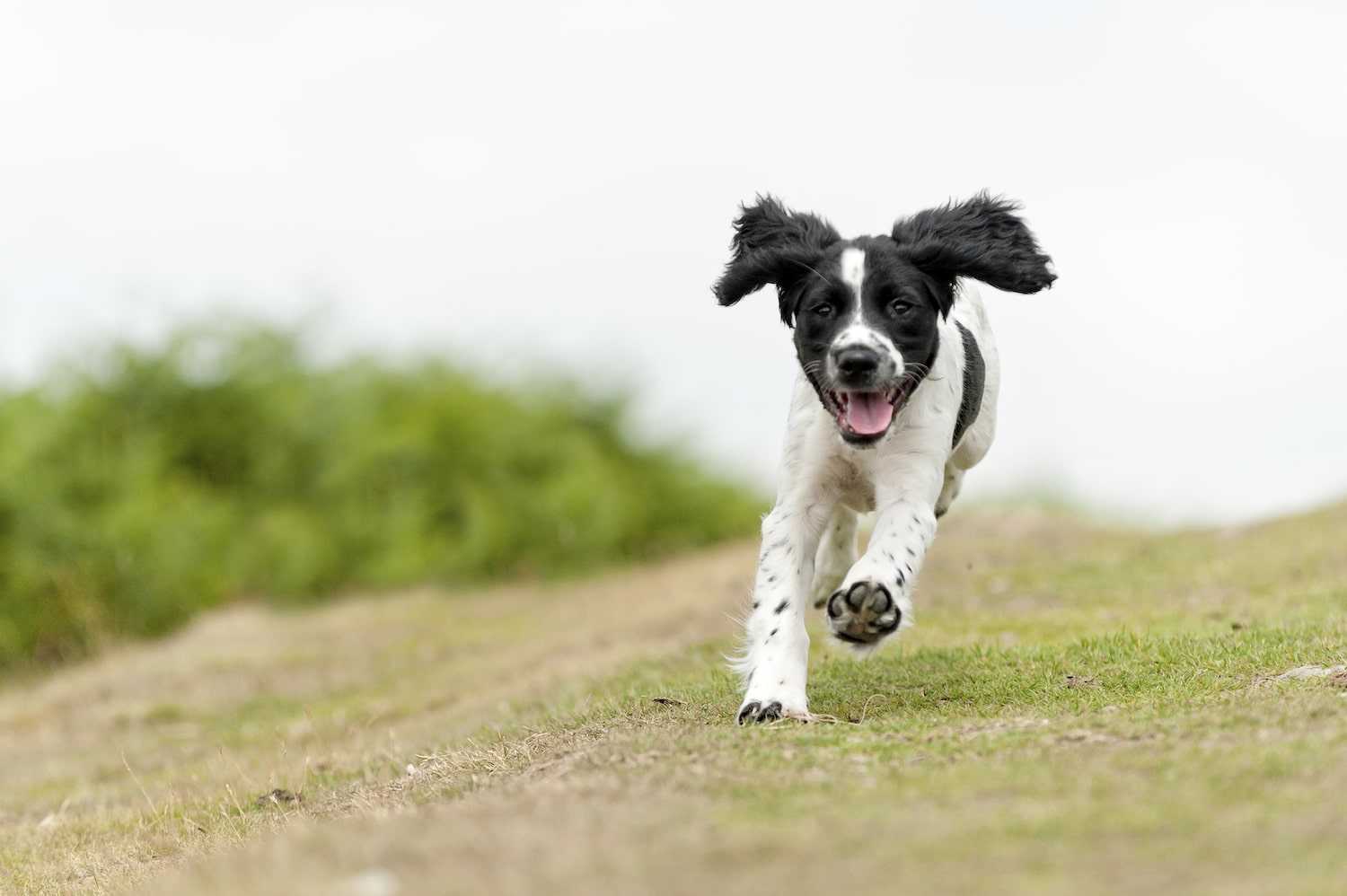 How Much Exercise Does a Dog Need?