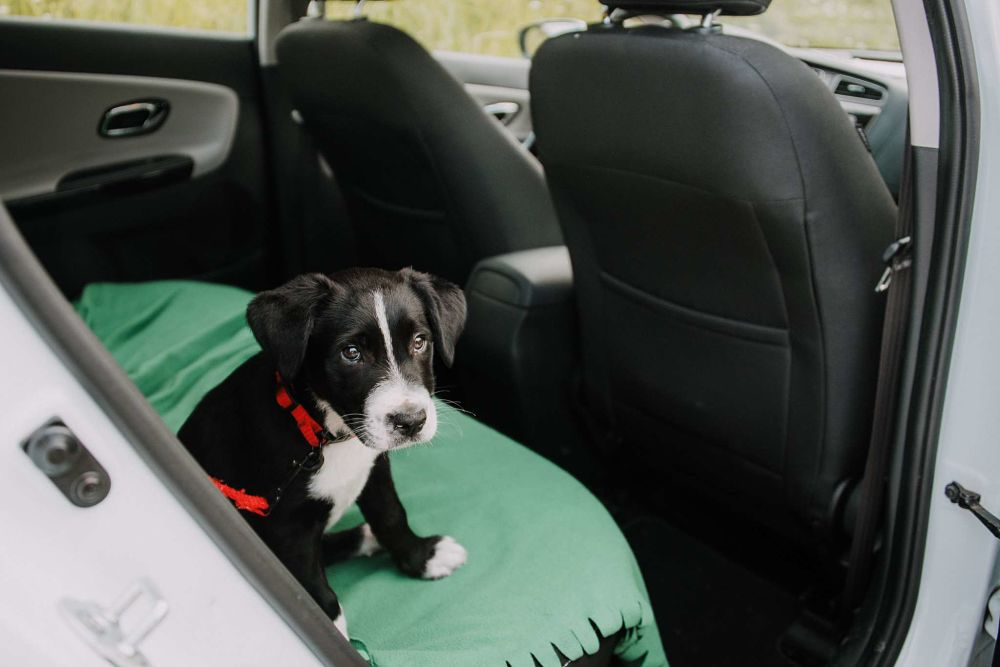 how to cool down a dog car