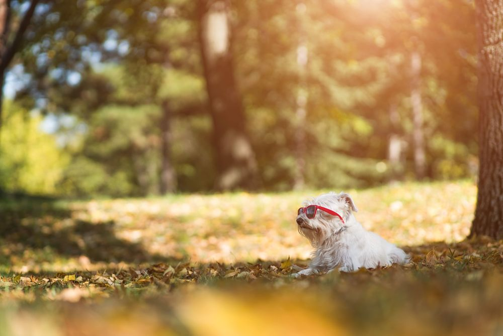 how to cool down a dog shade