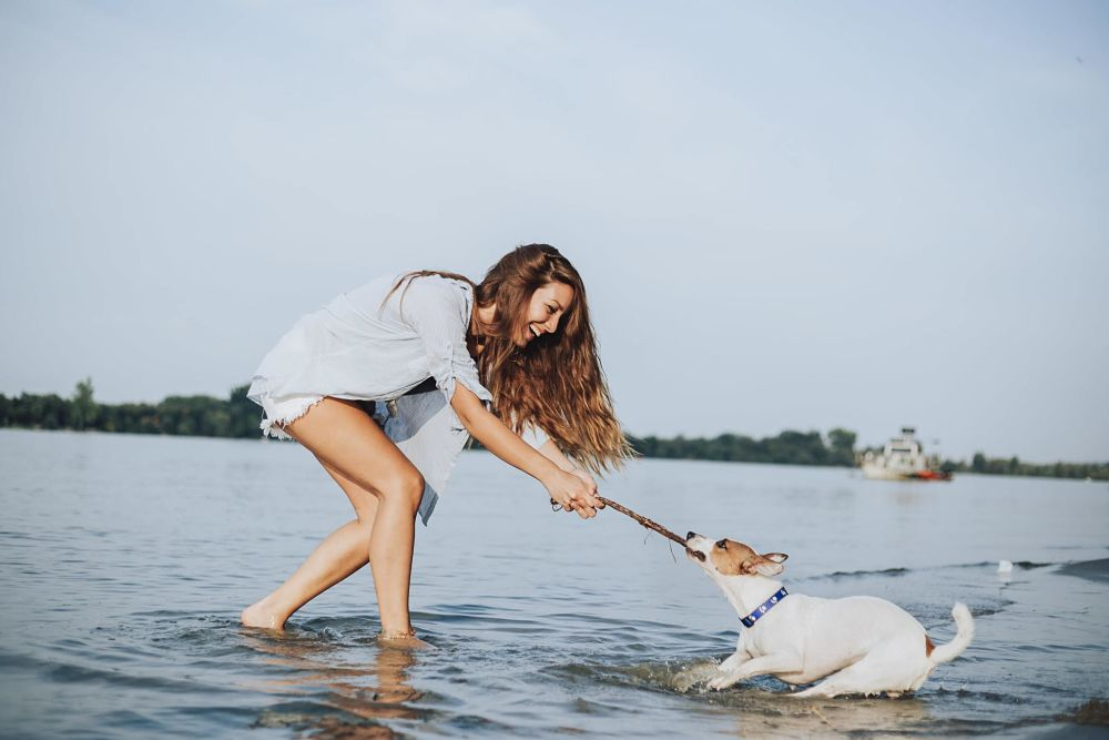 how to cool down a dog swimming